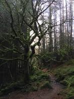 Faerie dell in Mynydd Deulyn
