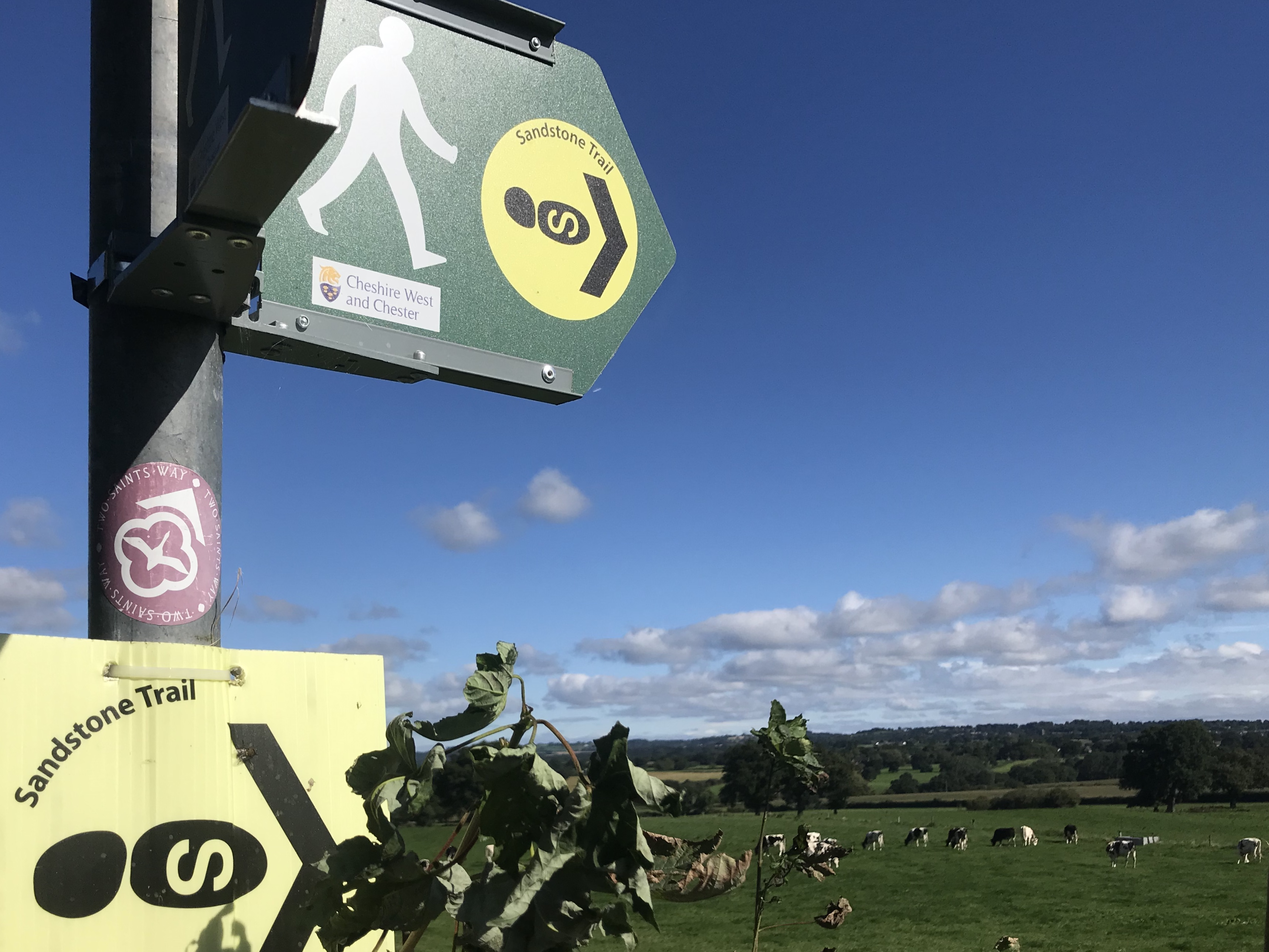 A signpost overlooking a field of cows
