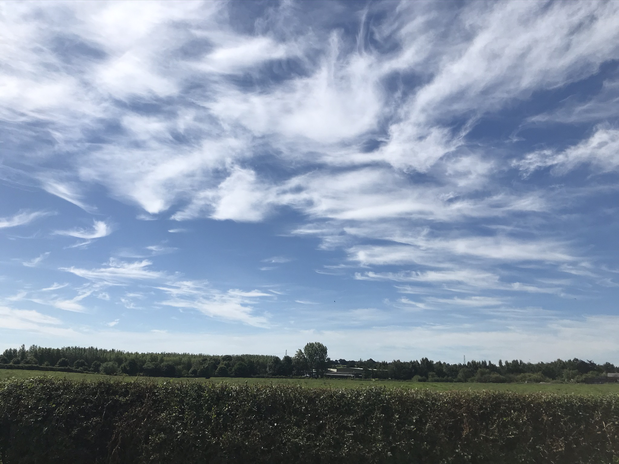 High whispy clouds in a blue sky above a neat field hedge
