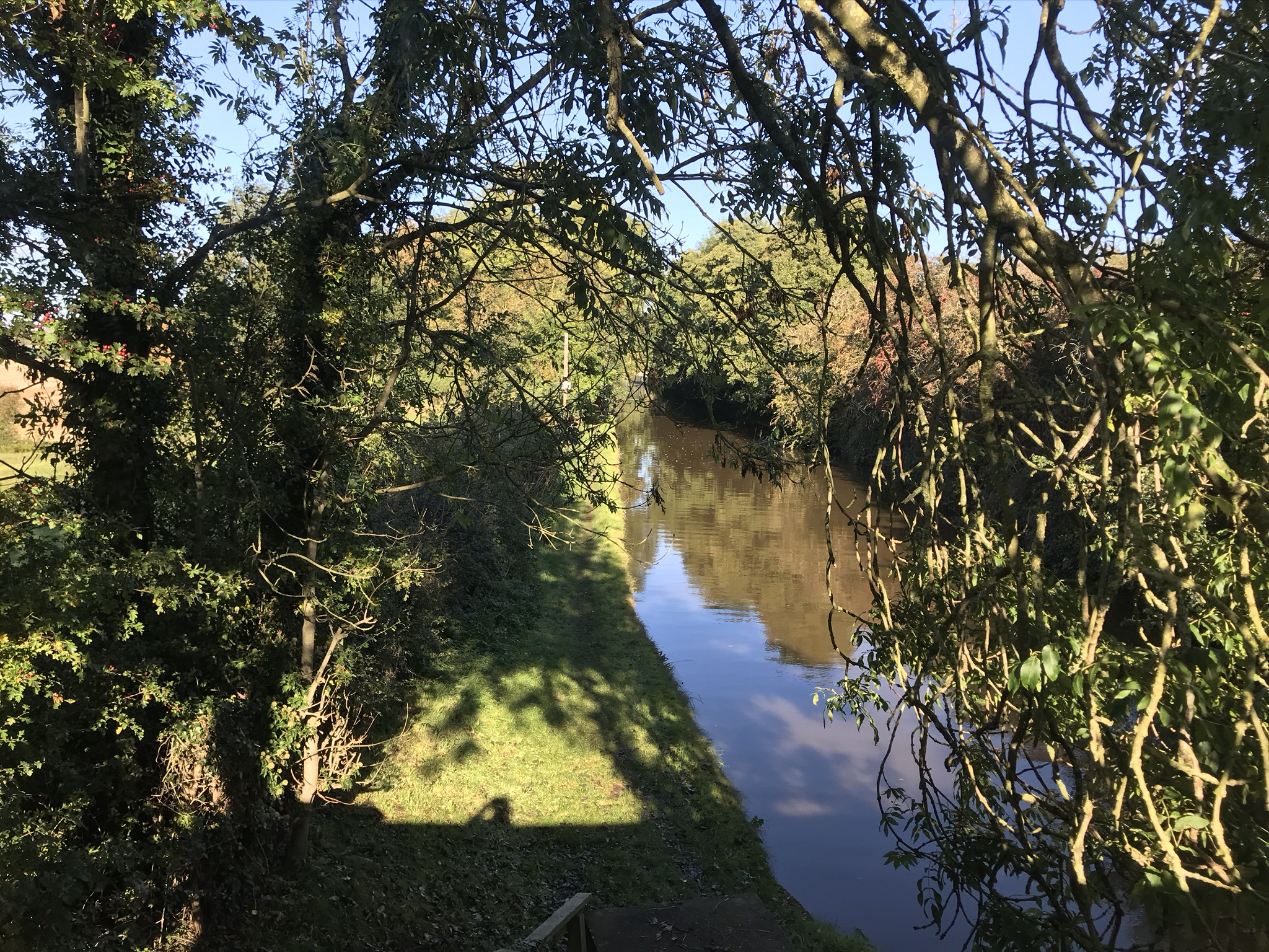 A view of the canal from the top of steps leading down to a grassy towpath. The blue sky can be seen through overhanging trees.