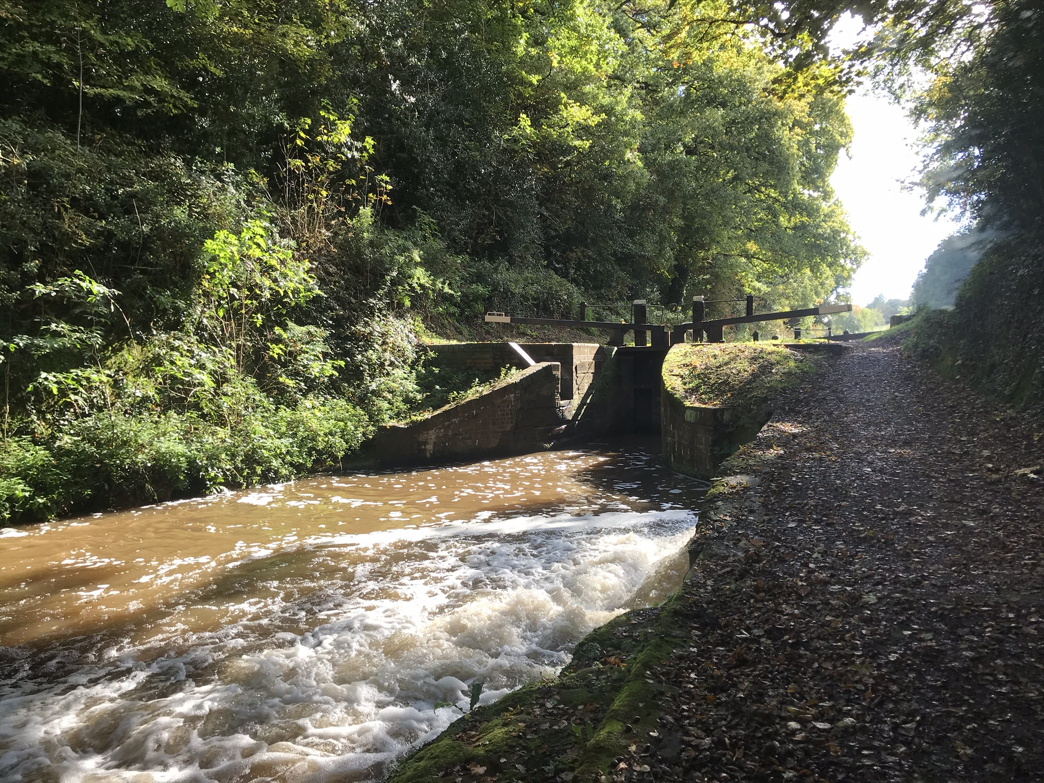 White water rushing out a sluice in front of a closed canal lock. The canal is in a cutting and sunning is glinting through the tall leafy trees in the background