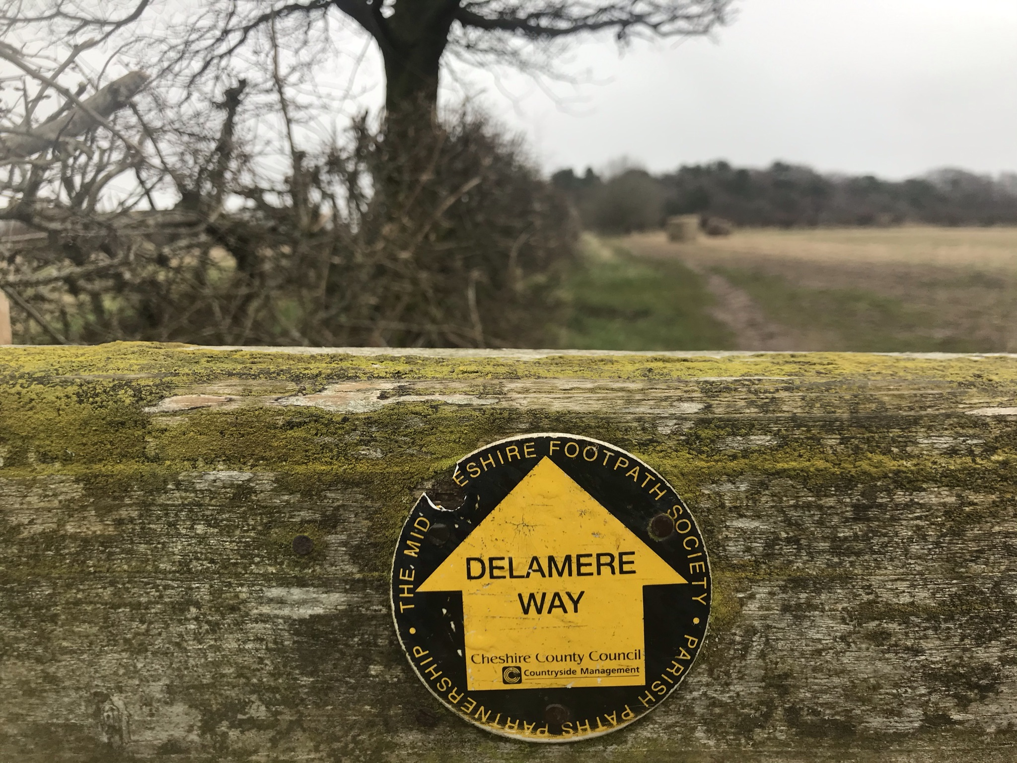 A tatty Delamere Way waymarker on lichen covered wood. The background is out of focus bare hedge and field