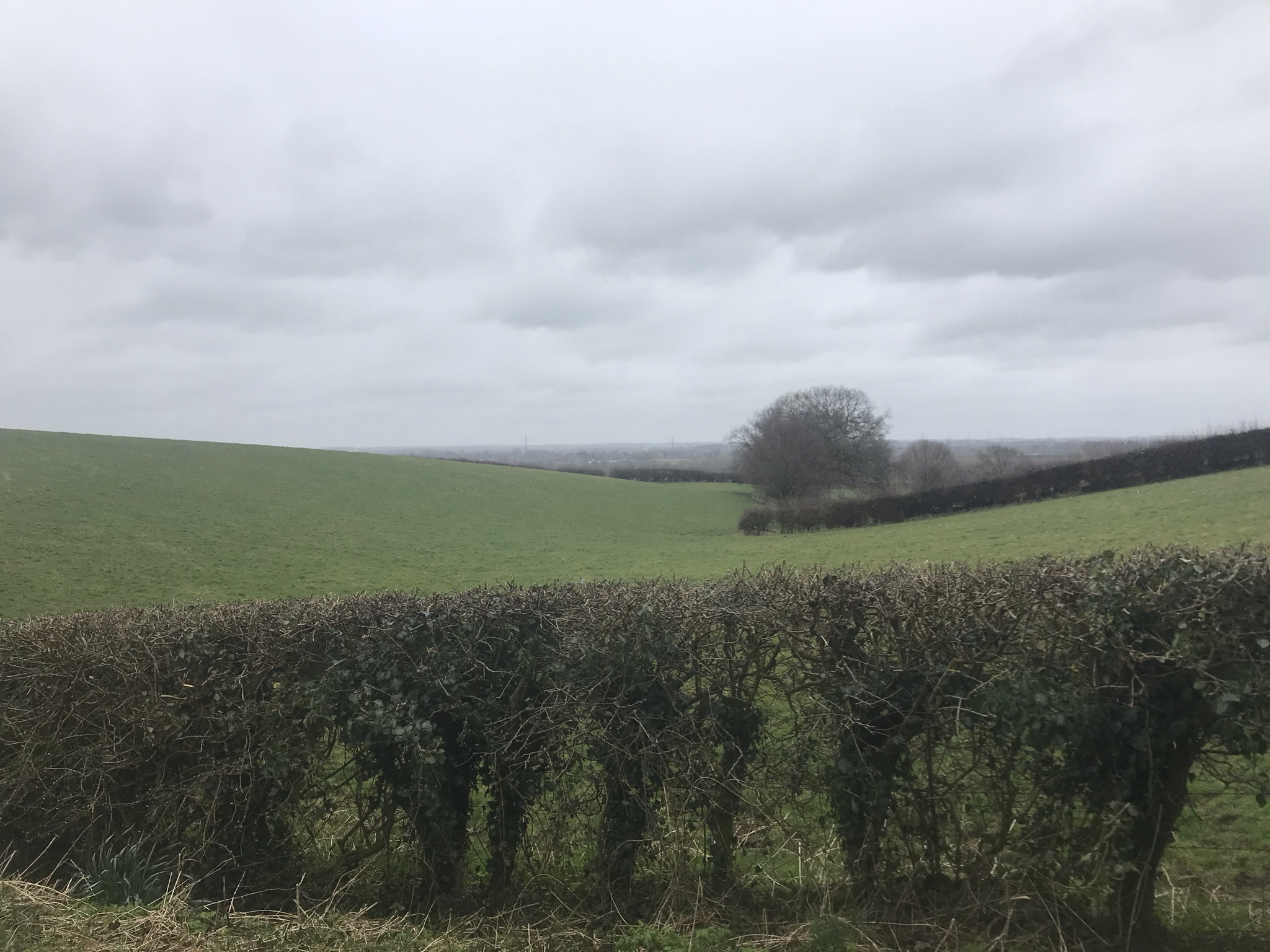 Green rolling field with bare hedges and trees, the sky is cloudy and grey