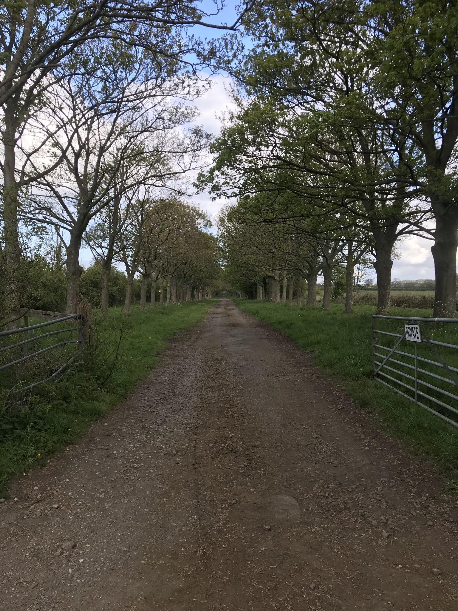 A tree lined dirt road with scruffy metal gates.