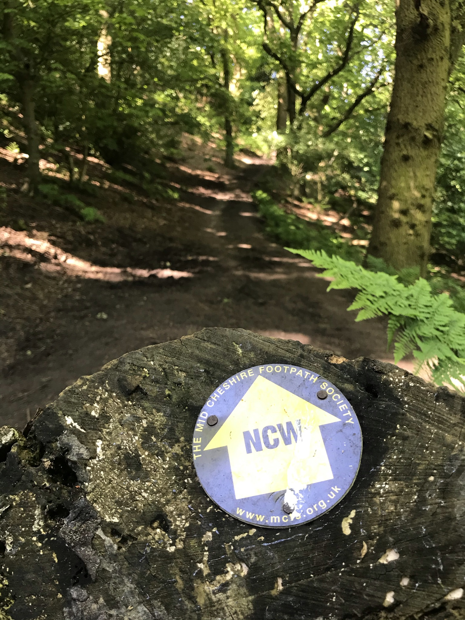 A waymark with NCW on a rock points along a wide sandy path in the trees