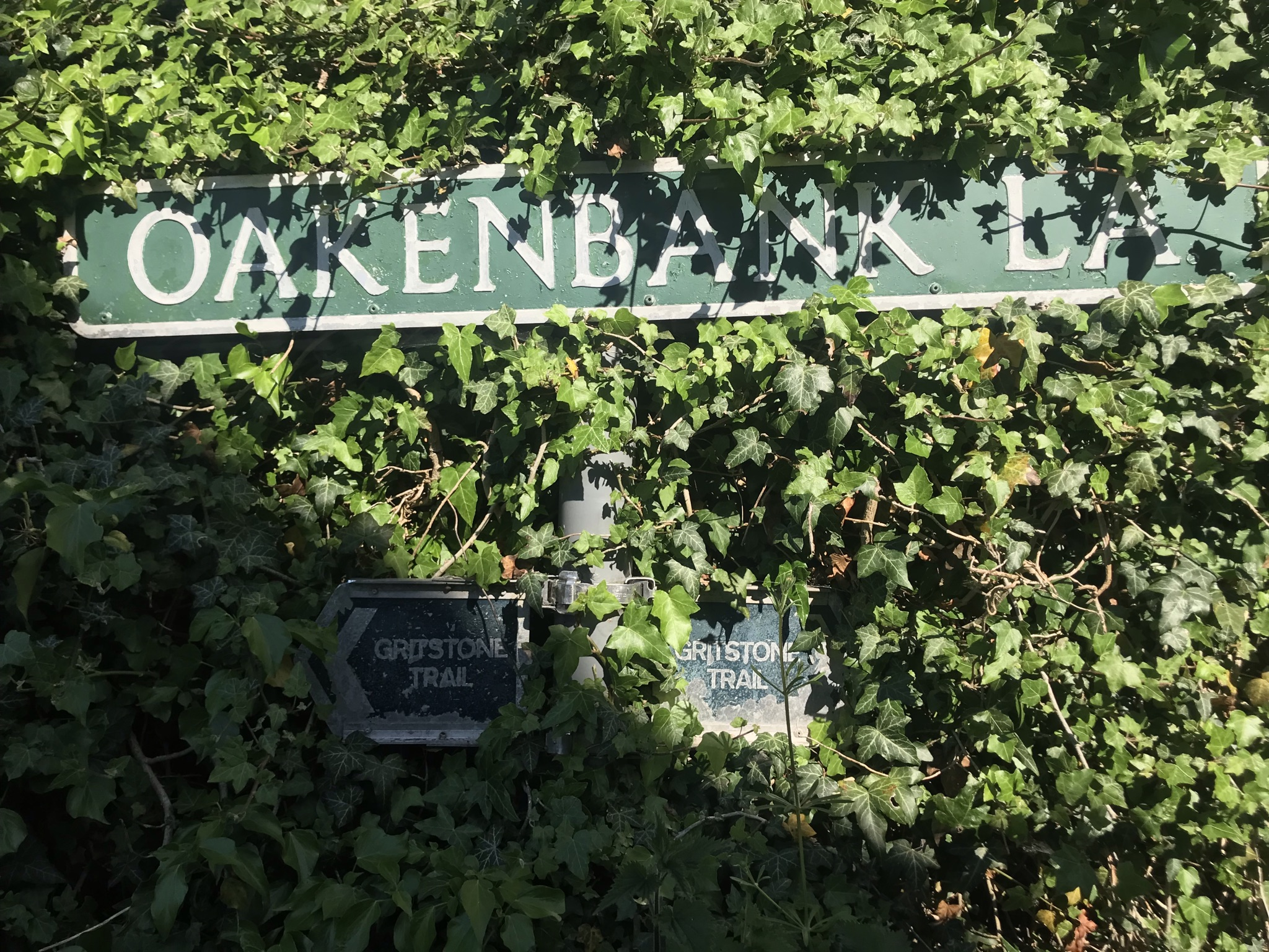Old work metal signs for the gritstone trail are half hidden in ivy. A shadow is cast across the ivy.