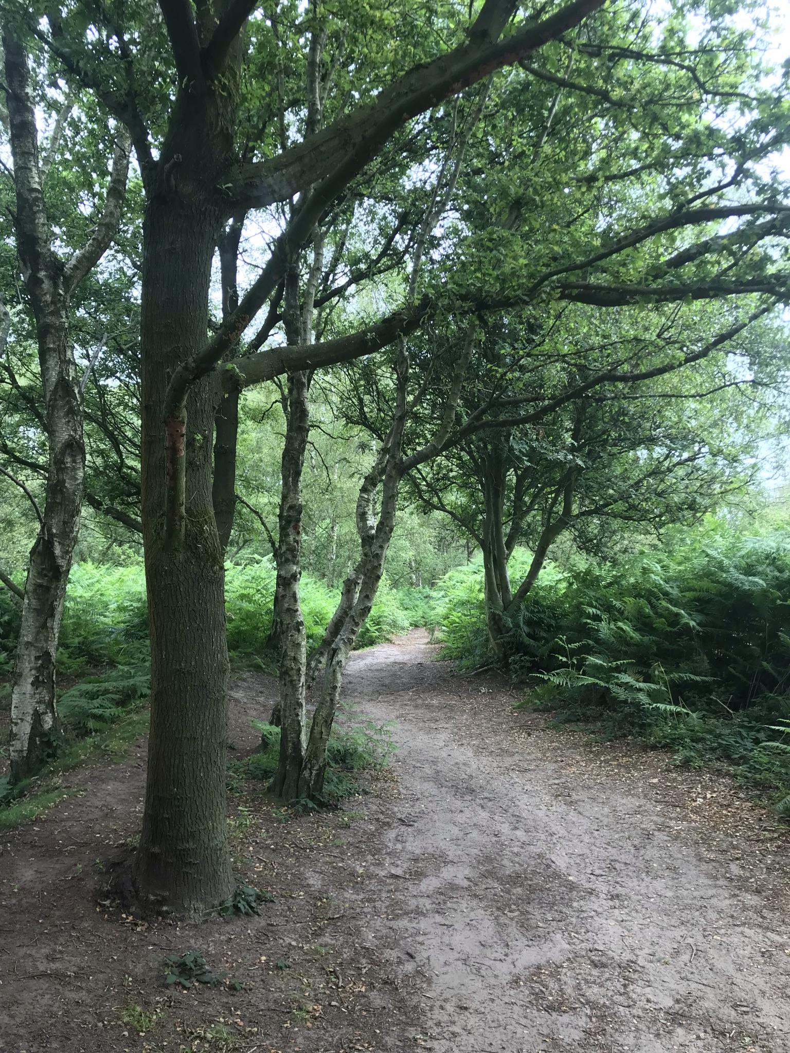 a sandy path through trees and bracken