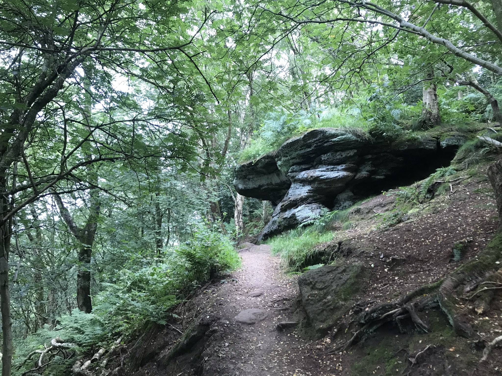 An outcrop of sandstone overhangs the path through trees on a steep hill