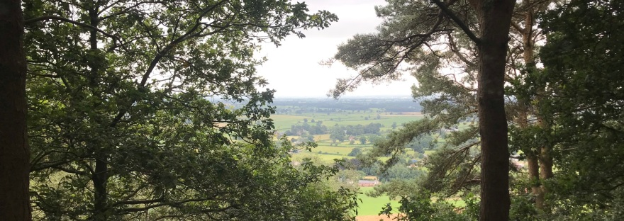 A hazy view through trees over a distance fields